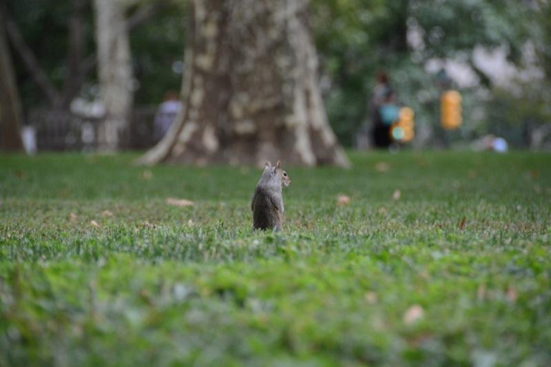 Philadelphia immancabile scoiattolo