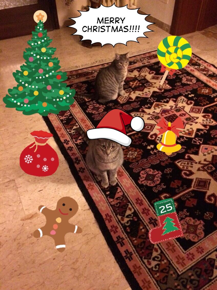 Gatti merry Christmas